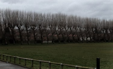 Inner city park.