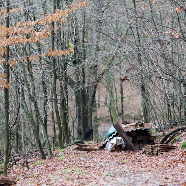 2012-12-28 D700 Waldspaziergang Wächtersbach 134