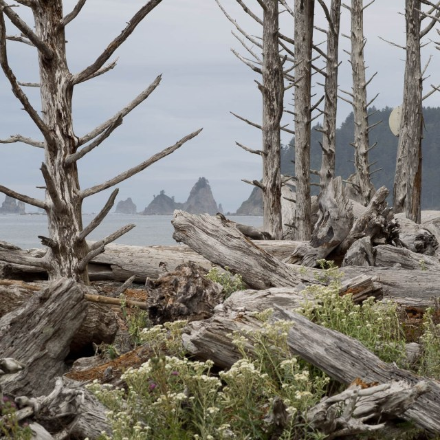 USA Reise Olympic National Park