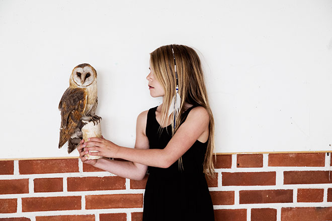 dosfamily-owl