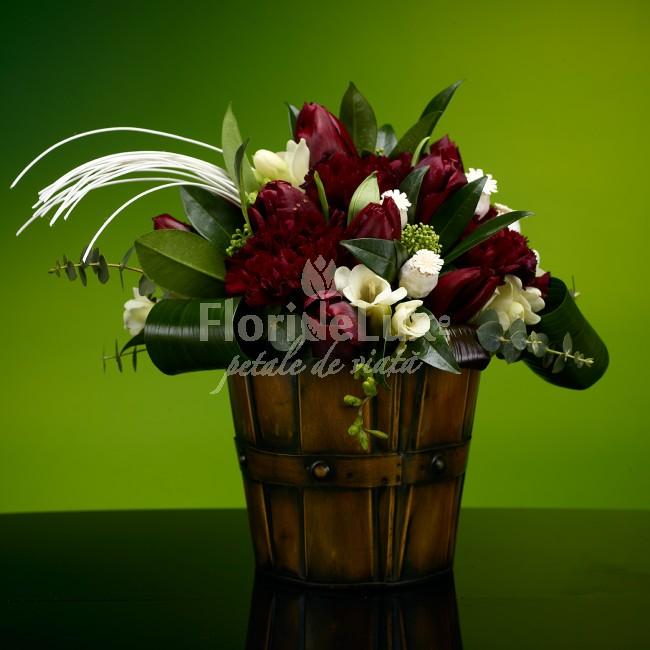 Floarea lunii ianuarie 2017, laleaua burgundy
