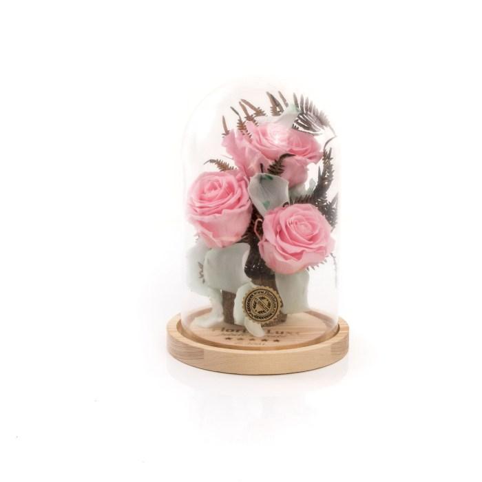 Trandafiri criogenati Pink Kiss, doar 339,99 RON!