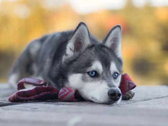 Как дешевле купить собаку?