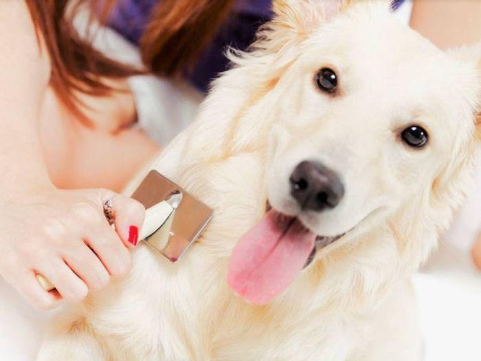 Вычесывание собаки: ну как же ее заставить лежать спокойно