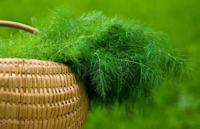 Как заморозить зелень на зиму