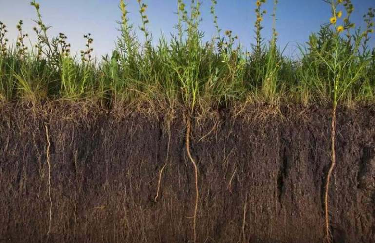 Роль гумуса в эволюции растений