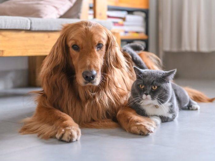 Как выбрать домашнее животное