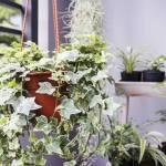 Что нужно помнить при покупке растений