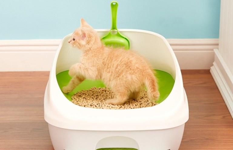 Как легко приучить кошку к туалету?