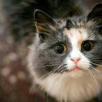 Язык жестов или как понять кошек