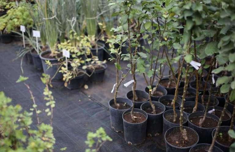 Как купить саженцы плодовых деревьев?