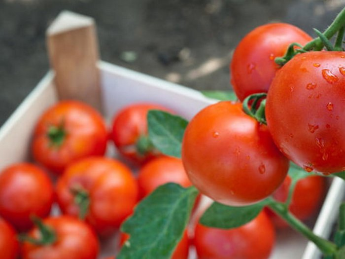 Как сохранить помидоры свежими до Нового года