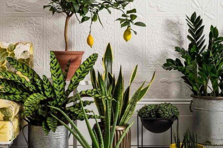 Дышите глубже: 10 растений, очищающих воздух в квартире