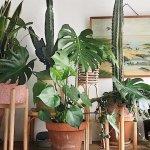 10 тенелюбивых растений, которые совершенно не обязательно ставить на подоконник