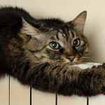 Тепло, еще теплее, горячо: как отопление влияет на кошек и собак