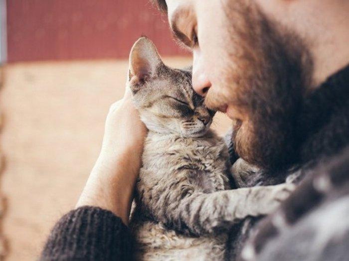 Научные причины завести себе котёнка