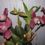 Это средство буквально оживило мои орхидеи
