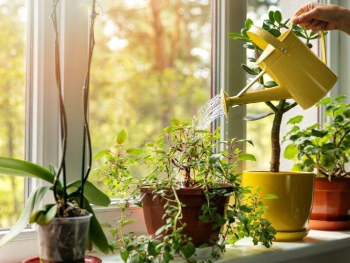 Основные правила полива растений