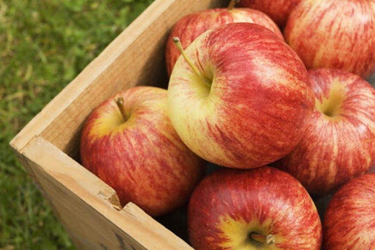 Самые сладкие яблоки. Какой летний сорт выбрать?
