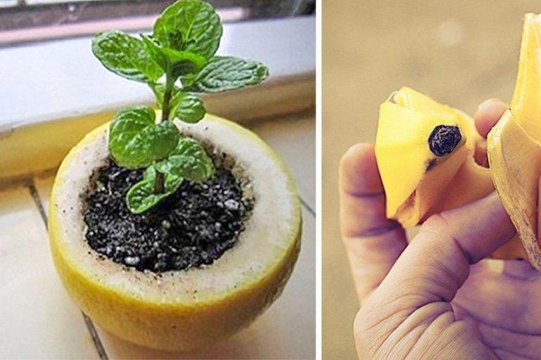 4 гениальных трюка для твоего сада