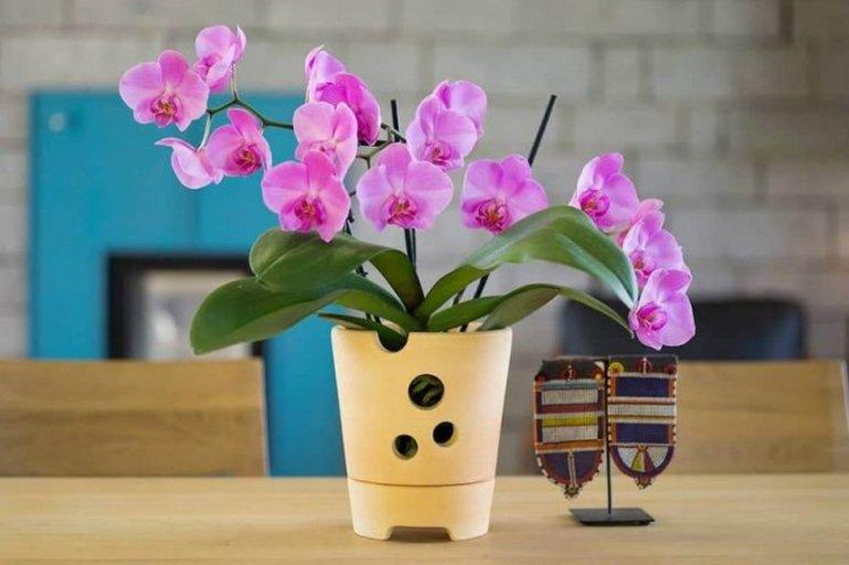 Орхидеи для начинающих: 6 неприхотливых видов, ухаживать за которыми проще простого