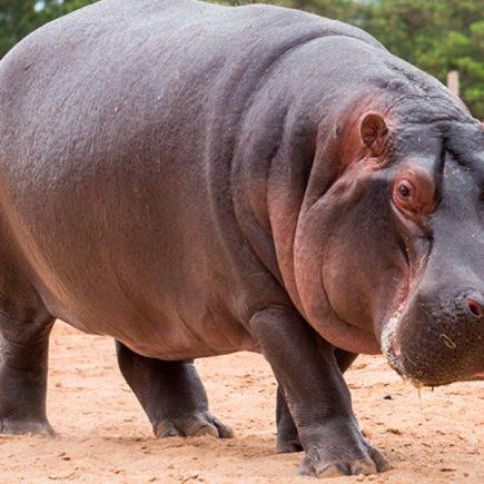 10 animales más peligrosos del mundo