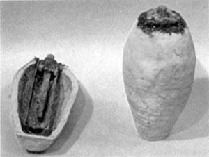 rádiokarbónová datovania z fosílií odobratých z jaskýň na ostrovoch pozdĺž juhovýchodnej Aljašky
