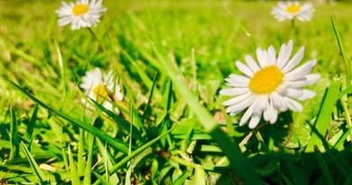 [dotb.eus] Tiempo primaveral para el fin de semana