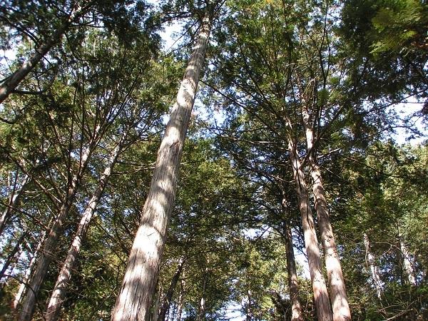 無垢の木2