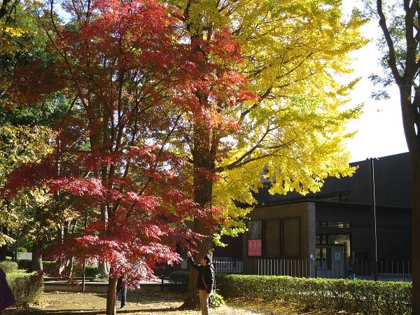 東京都美術館前のきれいな紅葉
