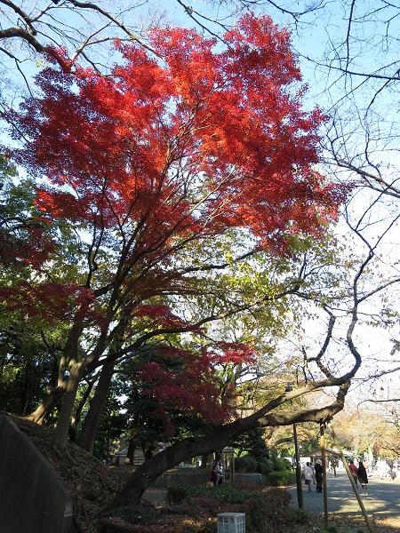 上野公園の紅葉