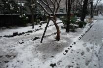 公園の雪景色
