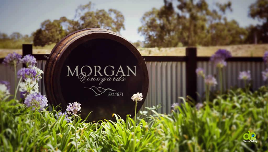 Morgan Vineyards yarra valley