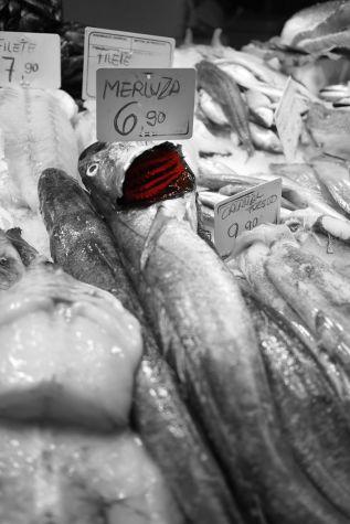 merluza/hake (mercat de la boquerìa, barcelona)