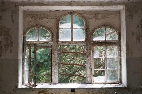 window pines