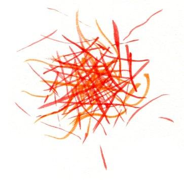 Saffron, watercolour Maria Larsson