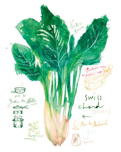 Swiss chard by Lucile Prache