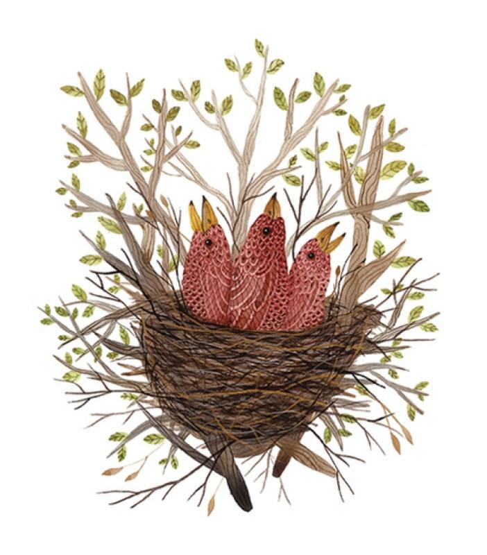rosy finch fledlings by Holly Ward Bimba