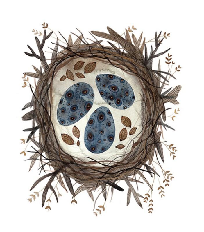 Birds boreal nest by Holly Ward Bimba