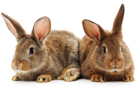 RabbitMQ кластер