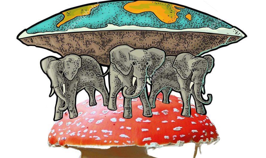 Цивилизация на грибах
