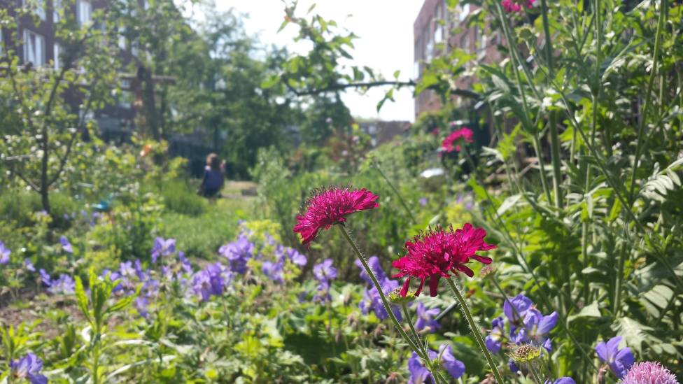 de tuin (vorig jaar)