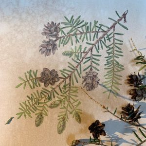 Year of Botanicals: Winter Branches @ Hoffman art Center - ZOOM