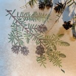 https://hoffmanarts.org/events/year-of-botanicals-winter-branches-with-dorota-haber-lehigh/