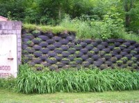 Sustainable practices for landscape design: designing a ...