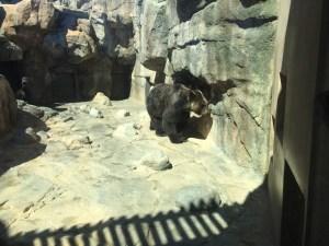 王子動物園のクマ