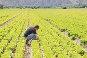 agricoltura ritorno alla terra