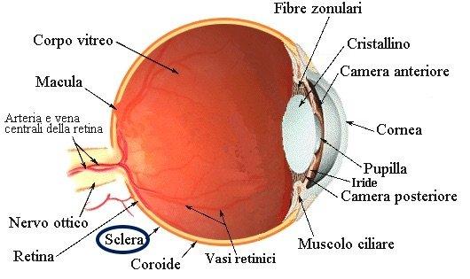 sclera occhio umano