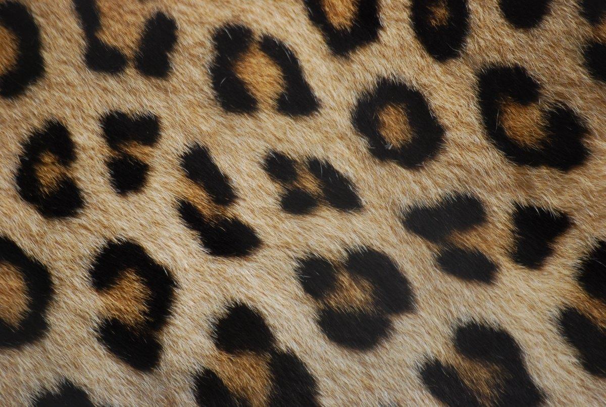 Angel In Leopard Skin Pants. Dotty' World