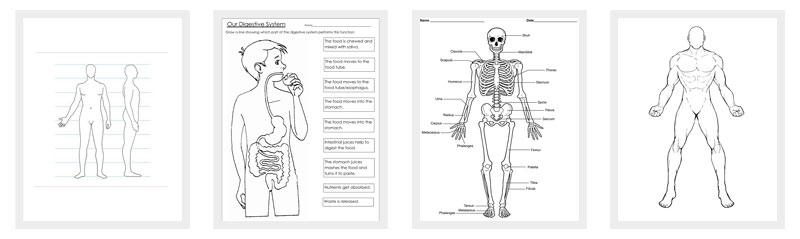 outline body template printable pdf dotxes templates
